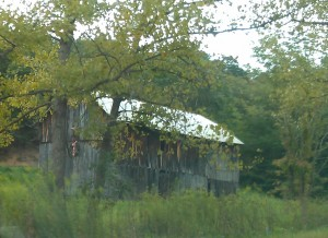 Dilapidated barn hidden by trees