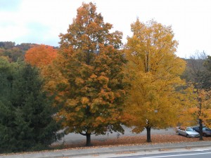Fall Colors_1